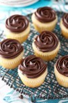 Boston Creme Pie Cupcakes???